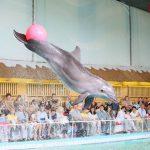 Тур в Ярославль с обзорной экскурсией и посещением дельфинария