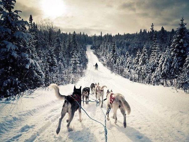 Тур Снежная Карелия